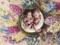 er picturekidz Nest- Hiral twins copy
